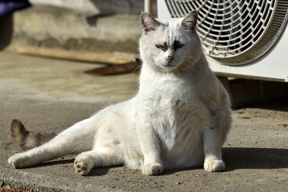 2020.1.14 我が家の猫たち(とらたろう、まお、くぅ)【Cats】_f0250322_22575065.jpg