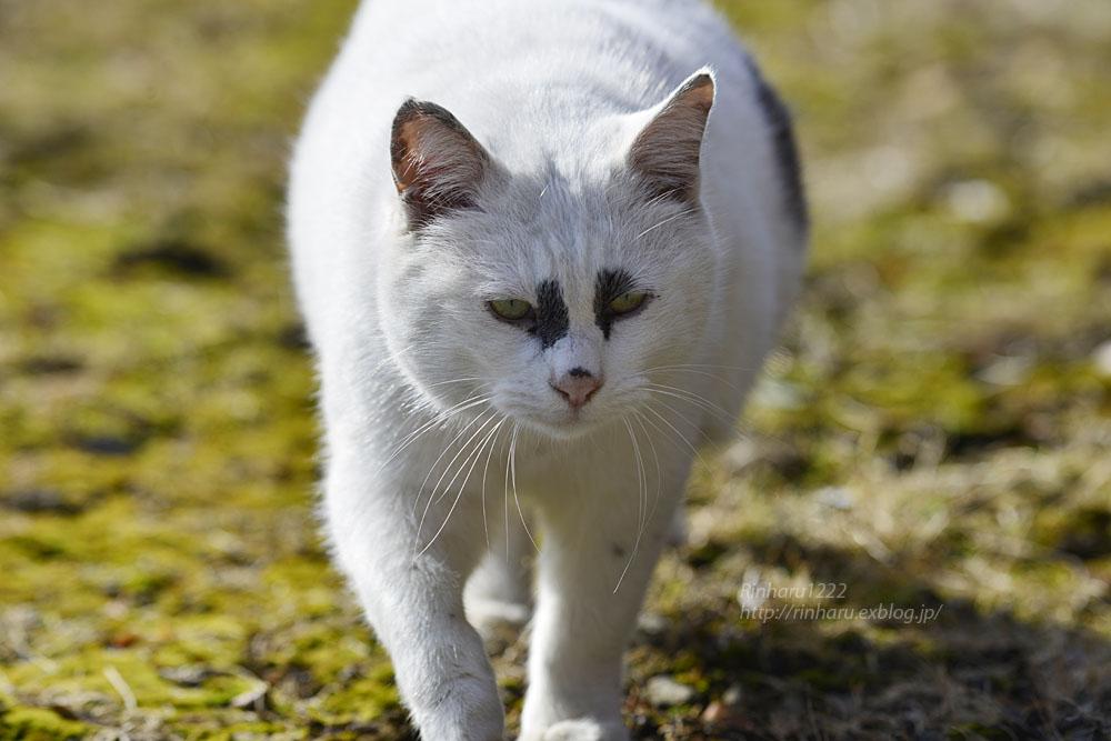 2020.1.14 我が家の猫たち(とらたろう、まお、くぅ)【Cats】_f0250322_22581027.jpg