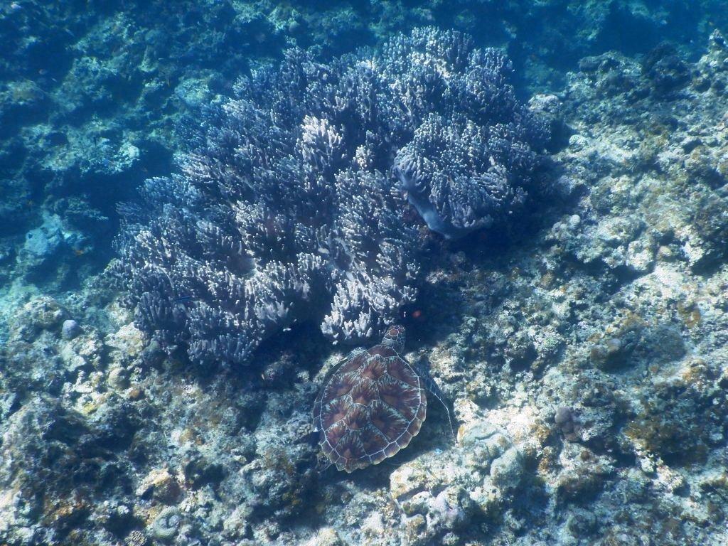可愛いウミガメが目の前にっ☆_a0189838_19291662.jpg