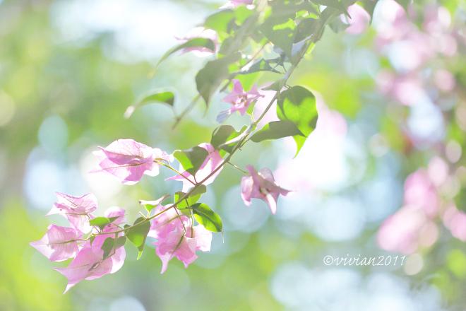 冬は暖かいところで撮影会 ~とちぎ花センター~_e0227942_22032021.jpg