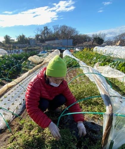 早朝の霜が解け始めて畑作業開始です_c0222448_14153059.jpg