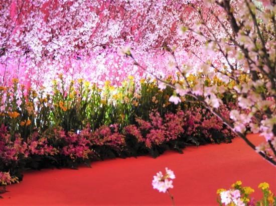 春の入り口_e0406450_17165135.jpg