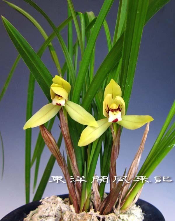 禮門                            No.2006_d0103457_01240308.jpg