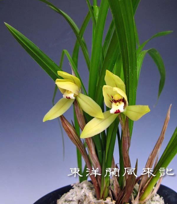禮門                            No.2006_d0103457_01240813.jpg