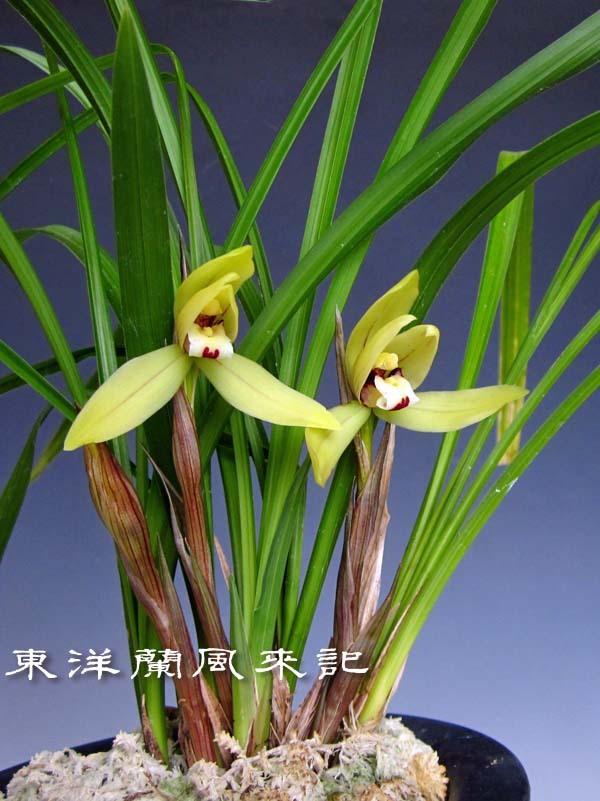 禮門                            No.2006_d0103457_01241741.jpg