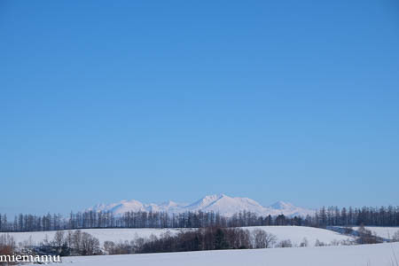 凛とした冬景色~1月の美瑛_d0340565_19474461.jpg