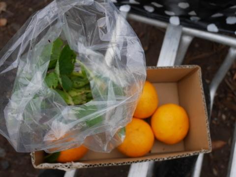 2・4開店の「Magic hour」に六国見山産野菜提供1・31_c0014967_10252322.jpg