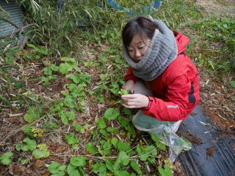 2・4開店の「Magic hour」に六国見山産野菜提供1・31_c0014967_10255760.jpg