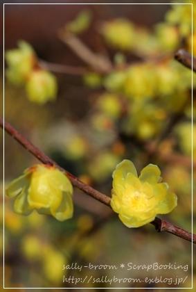 春がくる前に・・・_d0132371_20364675.jpg