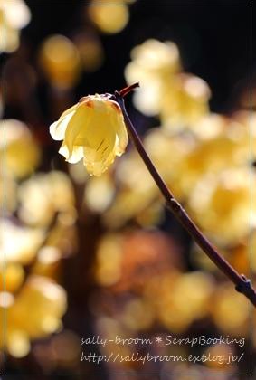 春がくる前に・・・_d0132371_20365581.jpg