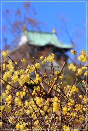 春がくる前に・・・_d0132371_20370462.jpg