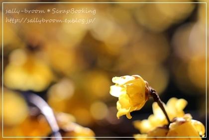 春がくる前に・・・_d0132371_20371153.jpg