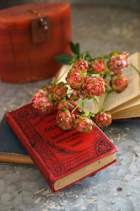 rose ラディッシュ_f0127281_16471686.jpg