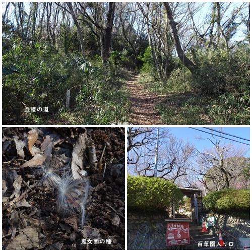 二月になってしまいました。  多摩丘陵百草園ウォーキング_c0051105_22365067.jpg