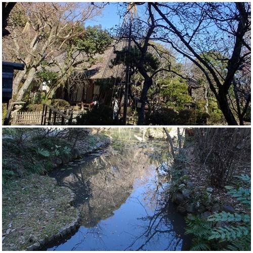 二月になってしまいました。  多摩丘陵百草園ウォーキング_c0051105_23110429.jpg