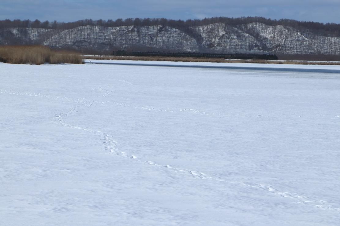 凍ったシラルトロ湖に煙が流れる - 2020年・釧網線 -_b0190710_22554976.jpg