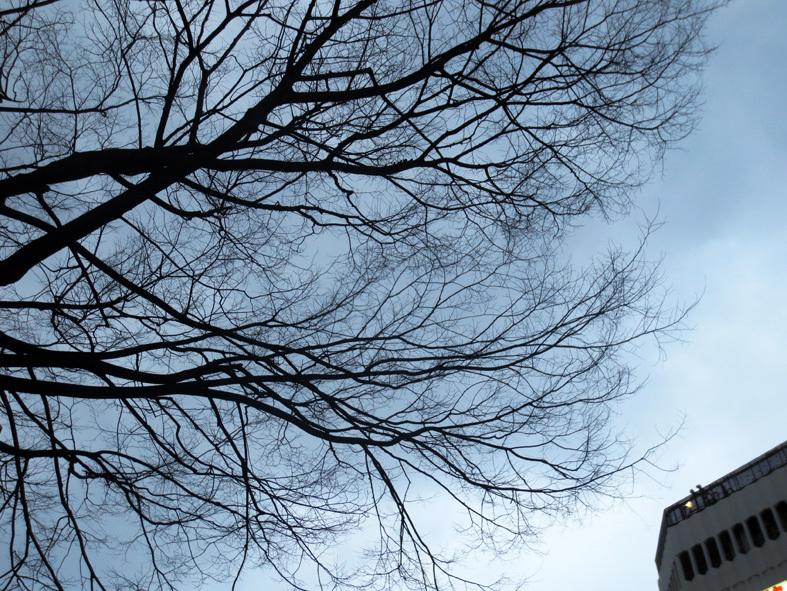 ■「朝鮮通信使」の夕べ──週替わりの夕暮れ[1/30-2/2]_d0190217_21530036.jpg