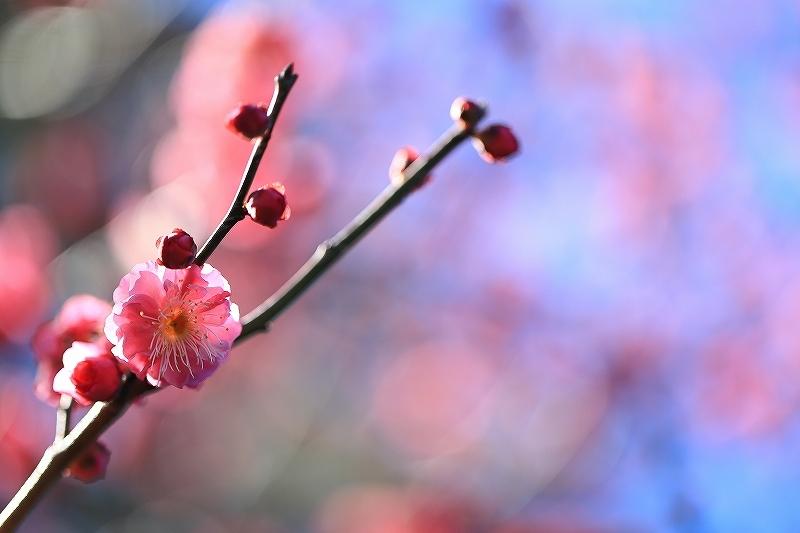 【皇居東御苑】【木場公園】_f0348831_23082014.jpg
