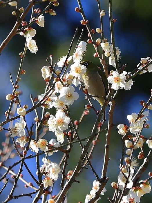 【皇居東御苑】【木場公園】_f0348831_23082044.jpg