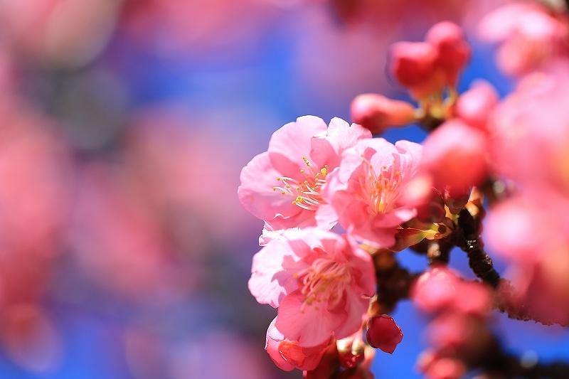 【皇居東御苑】【木場公園】_f0348831_23090549.jpg