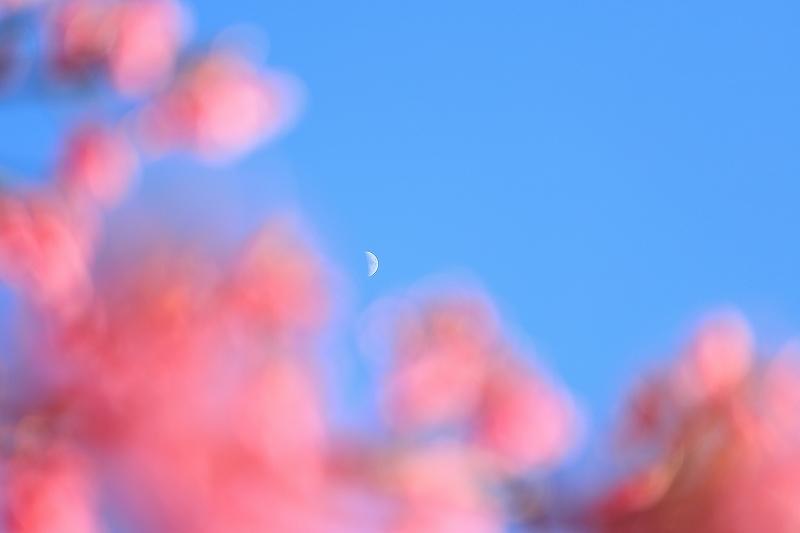 【皇居東御苑】【木場公園】_f0348831_23092003.jpg