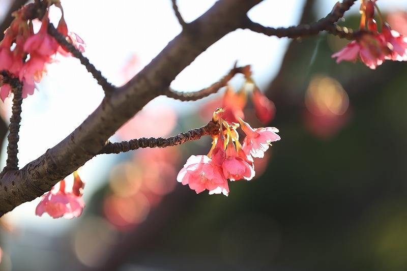 【皇居東御苑】【木場公園】_f0348831_23093575.jpg