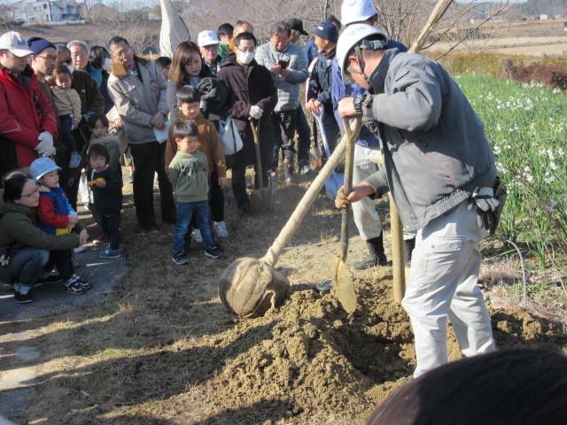 住民参加による八重桜の植樹_d0247833_17300356.jpg