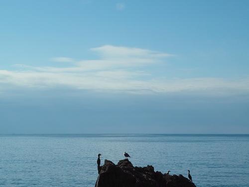 越前海岸とスイセン_d0005250_17225974.jpg