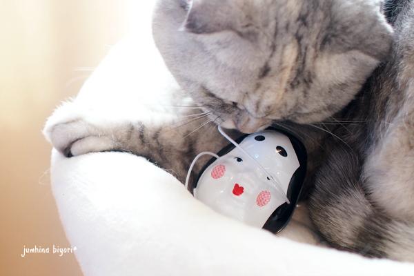 福娘猫♪_e0268051_16114747.jpg
