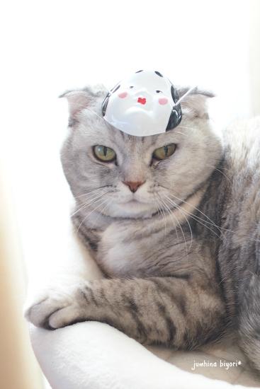 福娘猫♪_e0268051_16141366.jpg