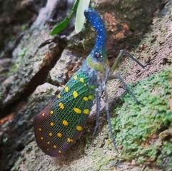 ボルネオで見たい昆虫 ベスト6_a0132757_18070095.jpg