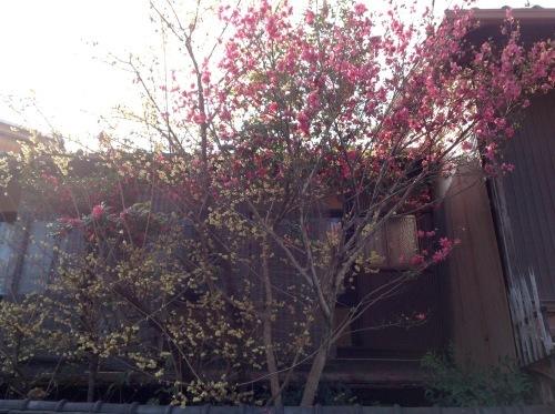 京の節分、坐禅と花と和菓子_b0153663_23311936.jpeg