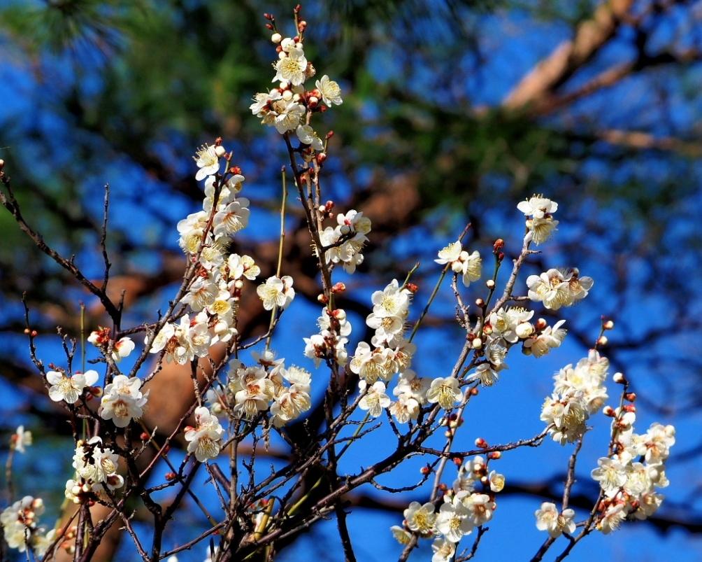 望遠ズームで 早春と温室の花_c0305565_17364972.jpg