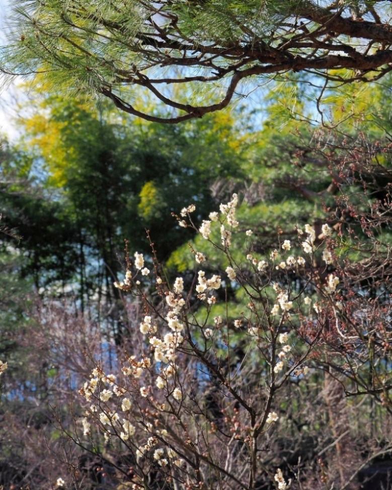 望遠ズームで 早春と温室の花_c0305565_17370509.jpg