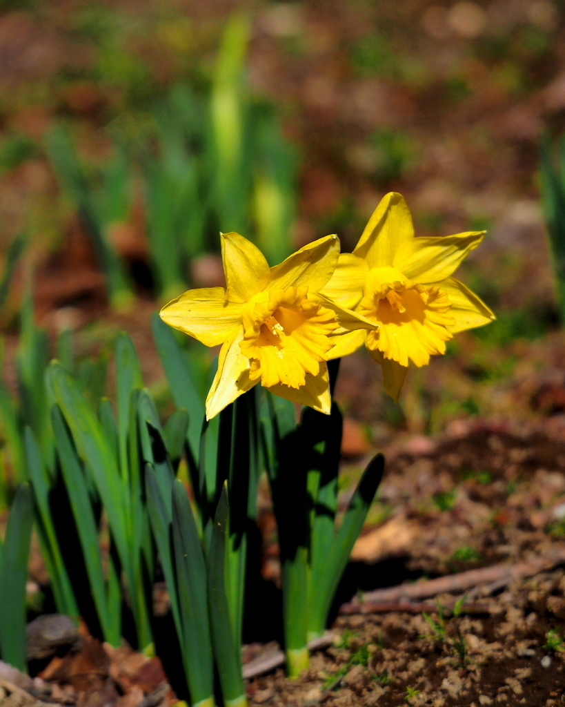 望遠ズームで 早春と温室の花_c0305565_17381525.jpg