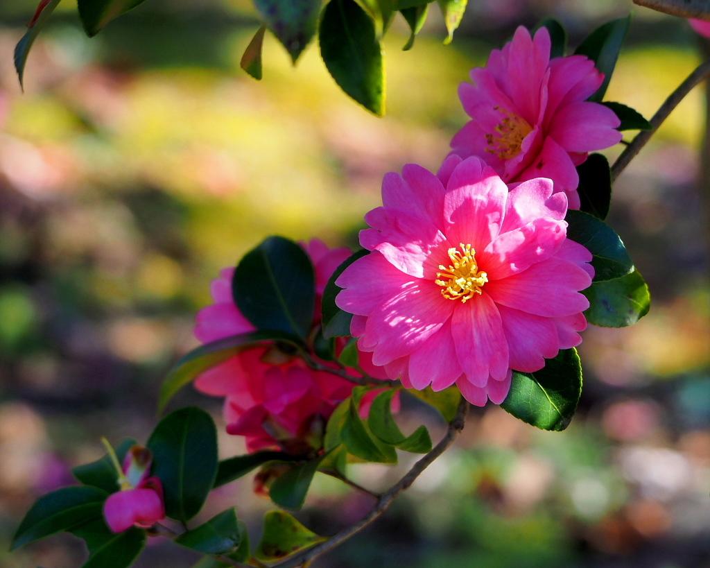 望遠ズームで 早春と温室の花_c0305565_17385564.jpg