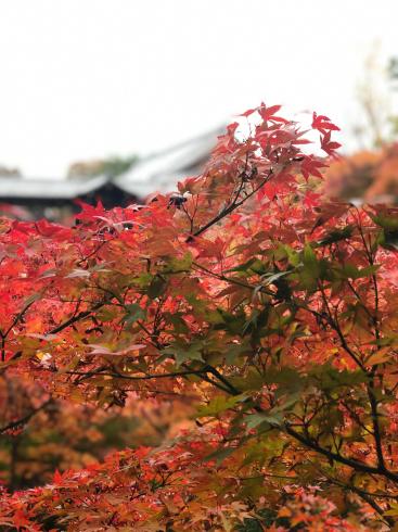 東福寺からの光明院_e0189465_17542041.jpg