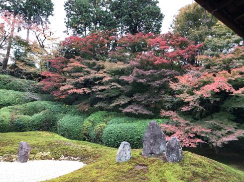 東福寺からの光明院_e0189465_17542480.jpg