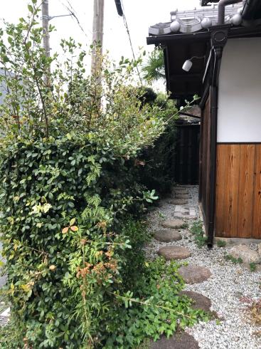 東福寺からの光明院_e0189465_17593634.jpg