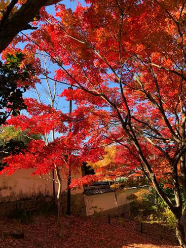 寺巡り_e0189465_18195247.jpg