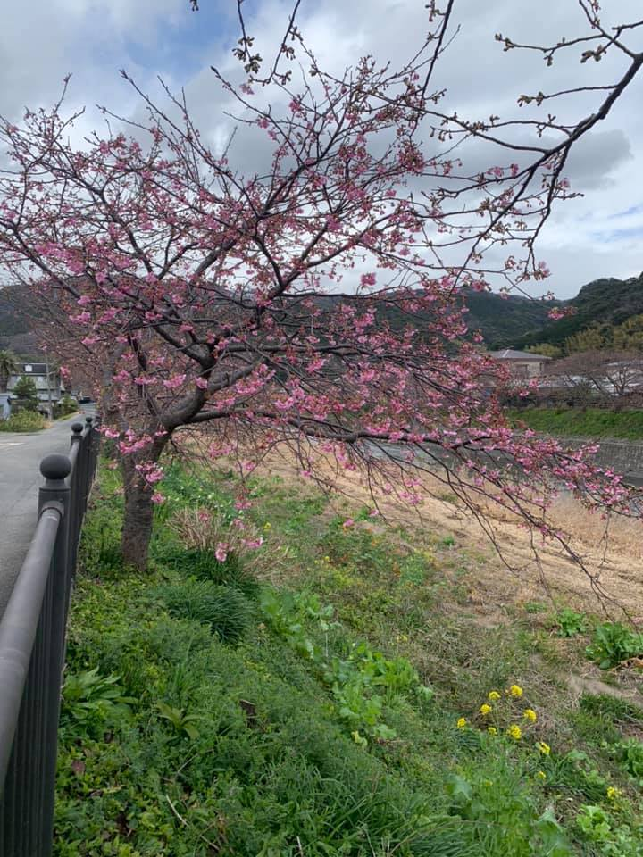 稲取温泉_e0040673_12030532.jpg