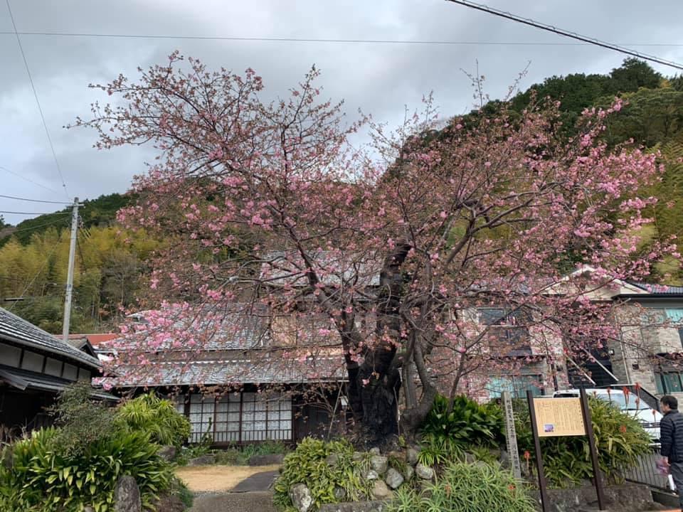 稲取温泉_e0040673_12123269.jpg