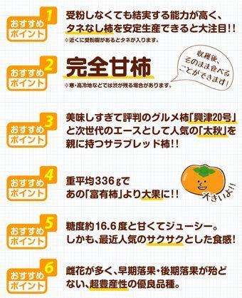 完全甘柿の新品種「大豊」の植え付け_f0018078_18263822.jpg