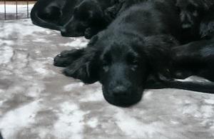犬は大らかに育てよう!③_b0084194_22102299.jpg