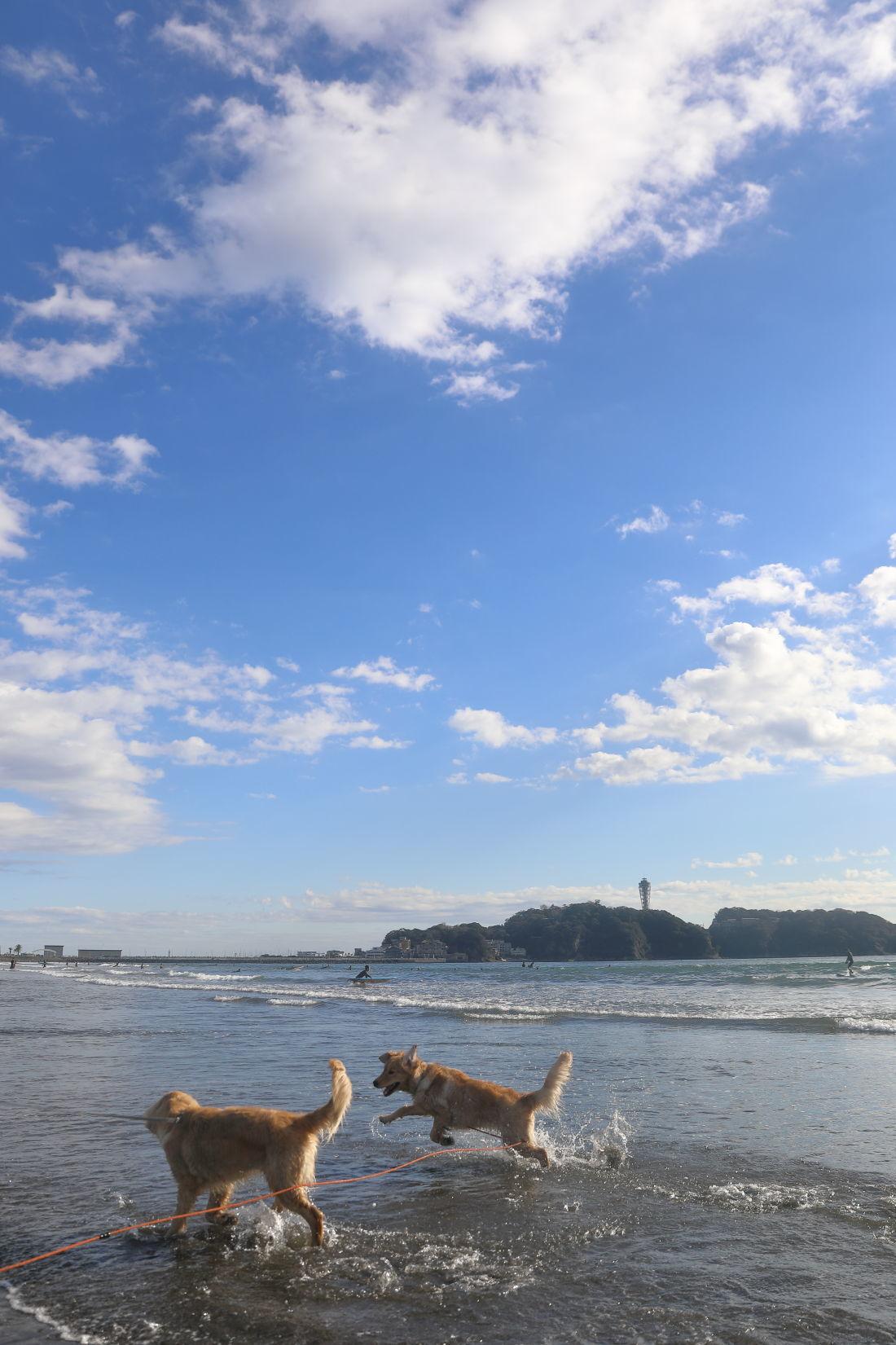 アンちゃんと鵠沼海岸♪_b0275998_10175942.jpg