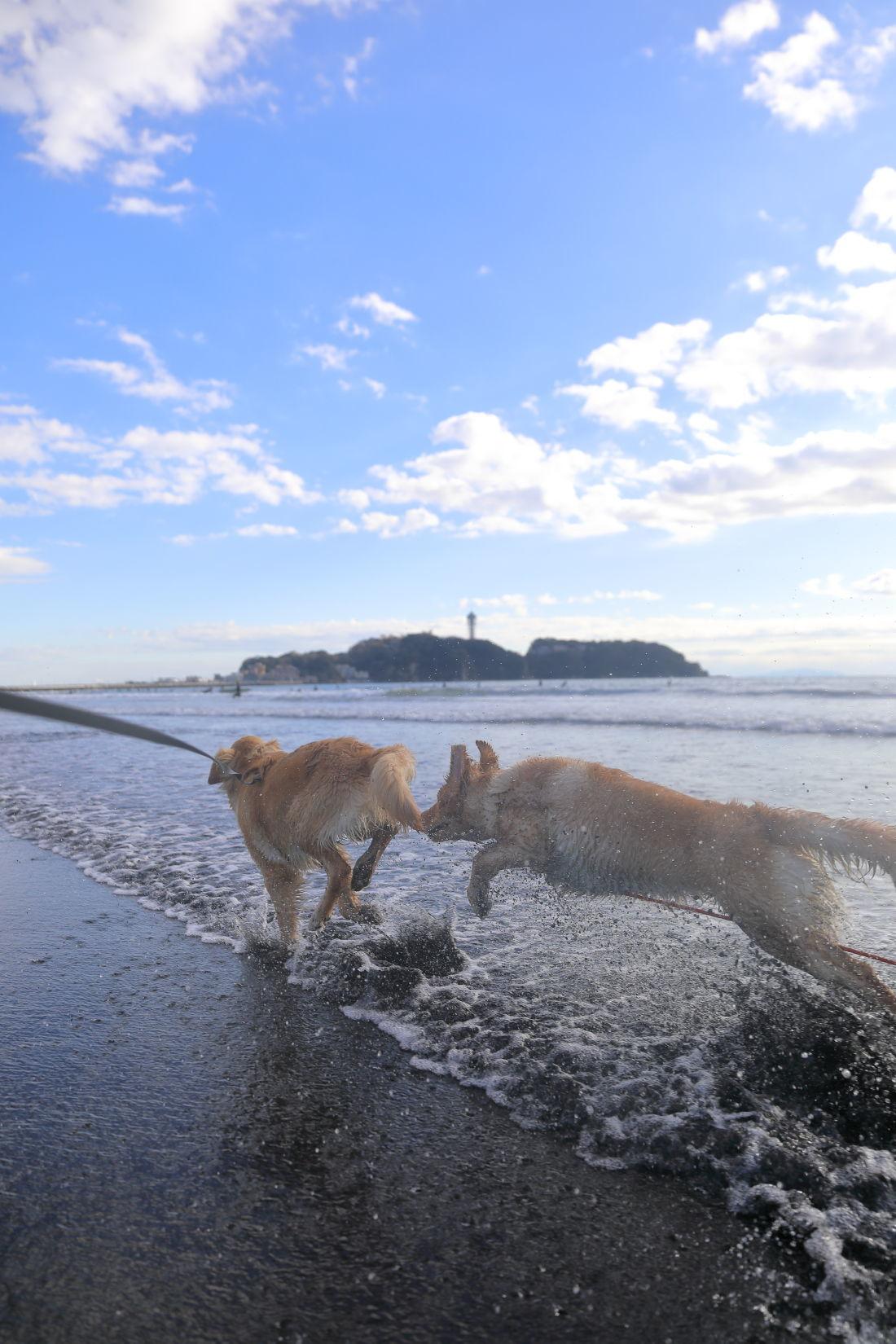 アンちゃんと鵠沼海岸♪_b0275998_10190491.jpg
