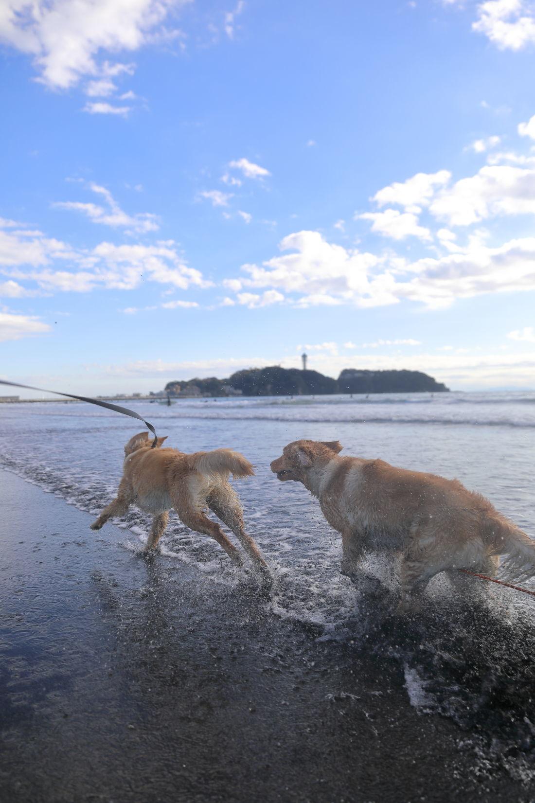 アンちゃんと鵠沼海岸♪_b0275998_10191087.jpg