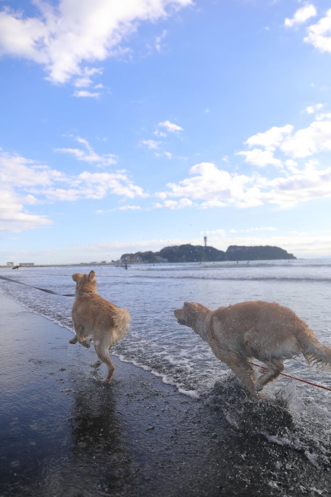 アンちゃんと鵠沼海岸♪_b0275998_10191212.jpg