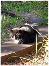 地域猫ちゃん、日光浴_d0221430_22344349.jpg