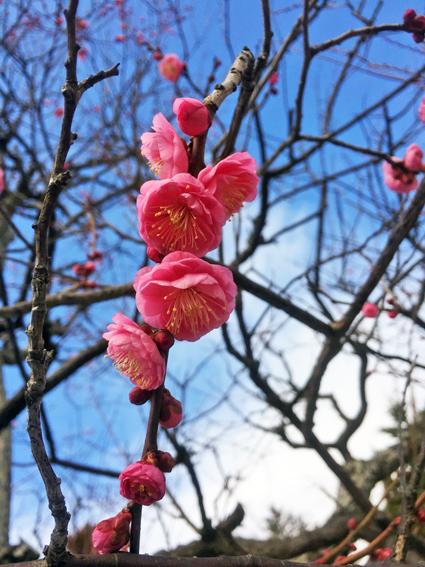 早春の花と春の味_f0045132_17263343.jpg